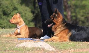 φιλοσοφία για την  εκπαίδευση σκύλων
