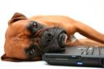 αρθρα εκπαιδευση σκυλων