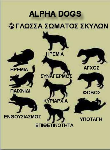 ΓΛΩΣΣΑ ΣΩΜΑΤΟΣ ΣΚΥΛΩΝ
